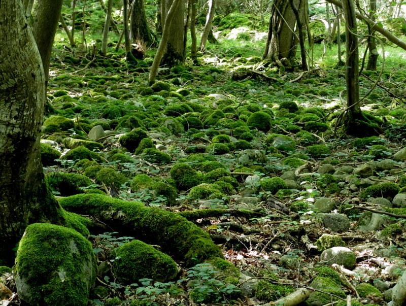 Nationalparken vid Kivik