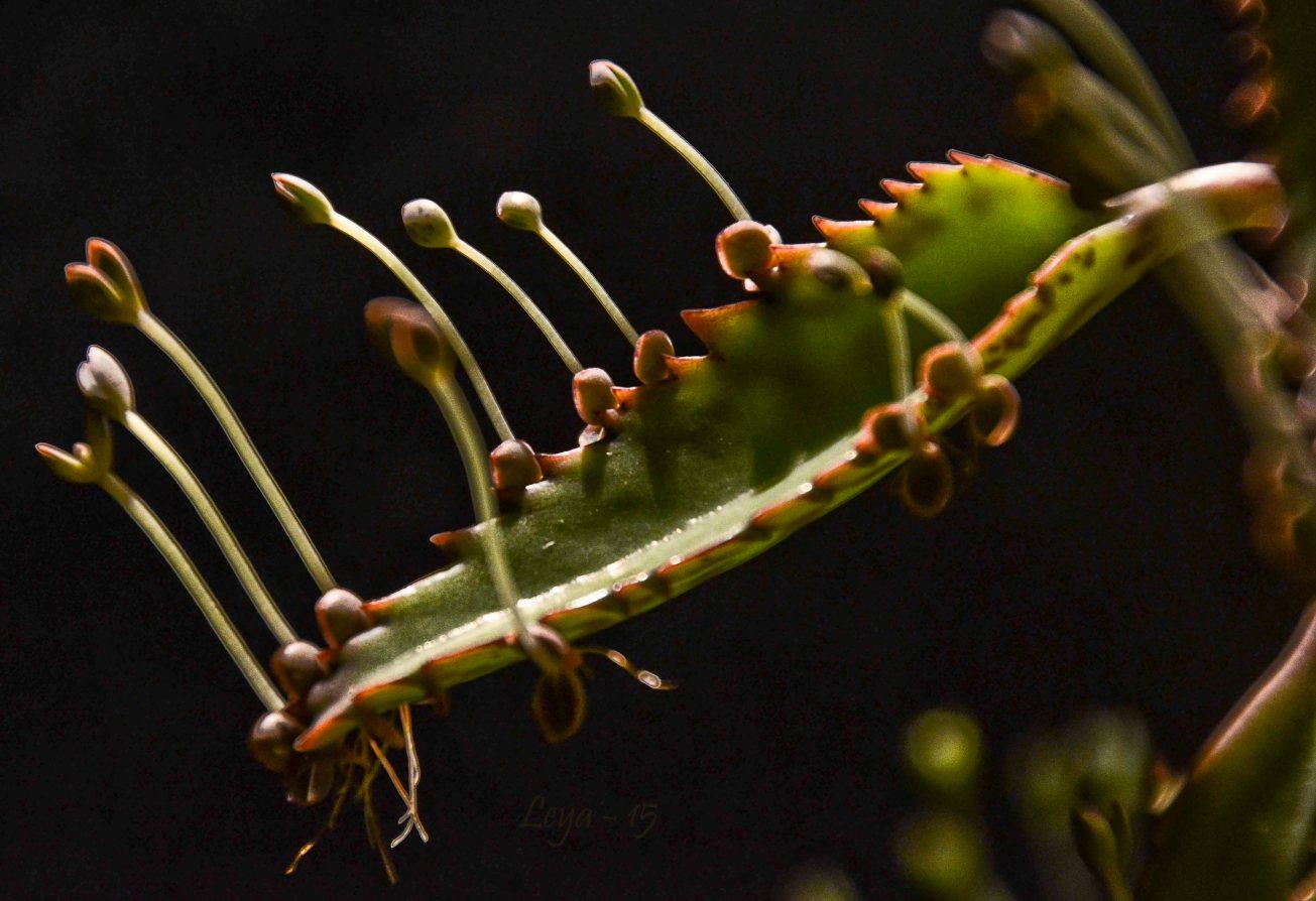 Närbilder plantan II 067_copy
