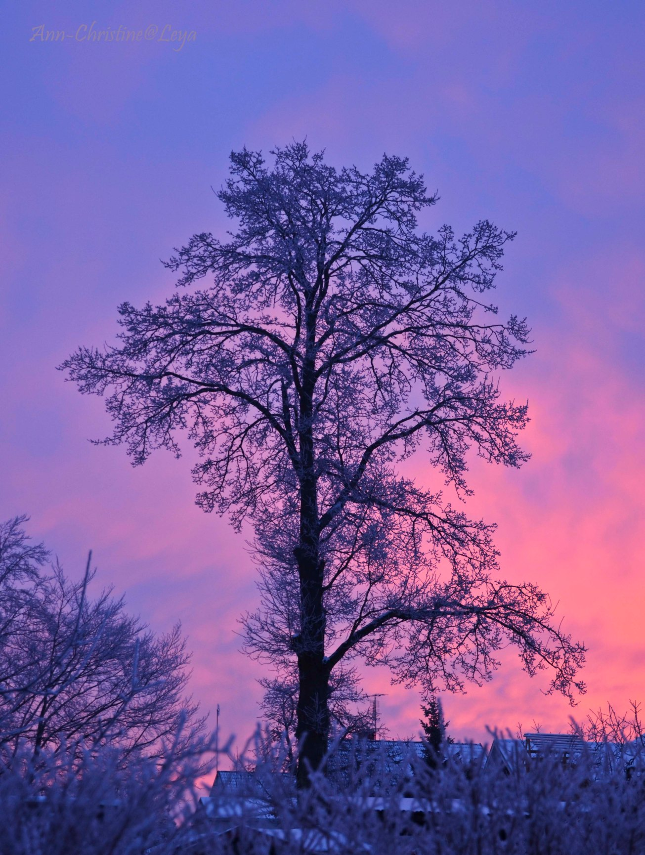 Blandat och fototisdag Värsjön och Hovdala 005_copy