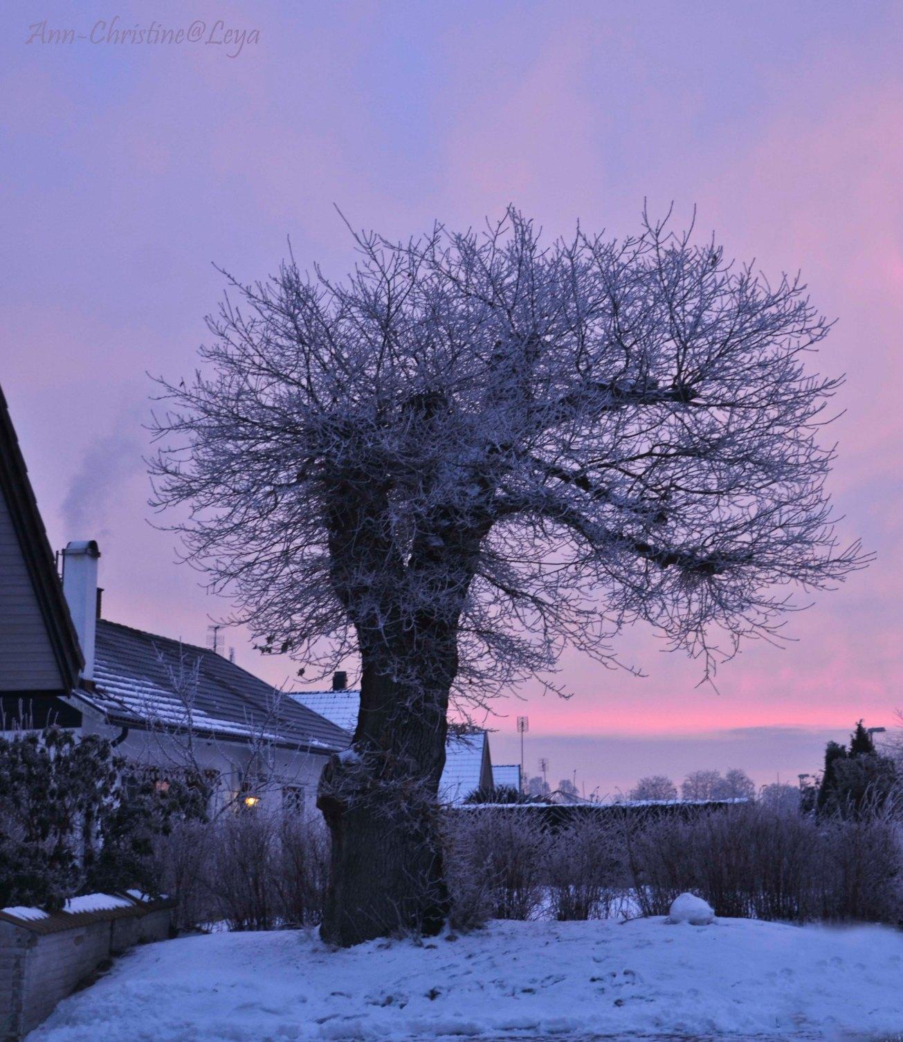 Blandat och fototisdag Värsjön och Hovdala 006_copy