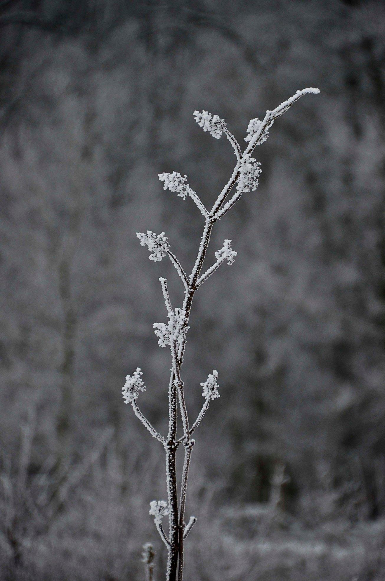 Blandat och fototisdag Värsjön och Hovdala 115_copy