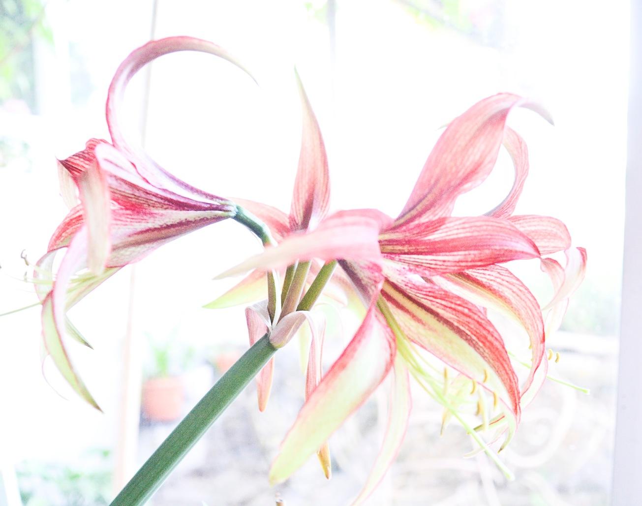 Orkide mm sommar 2016 067_copy