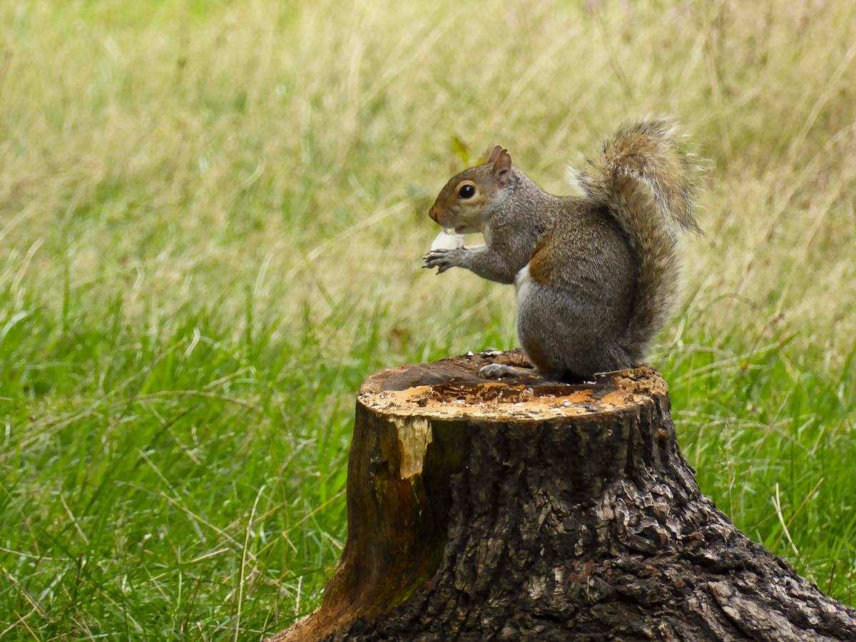 Park Animals - Squirrel
