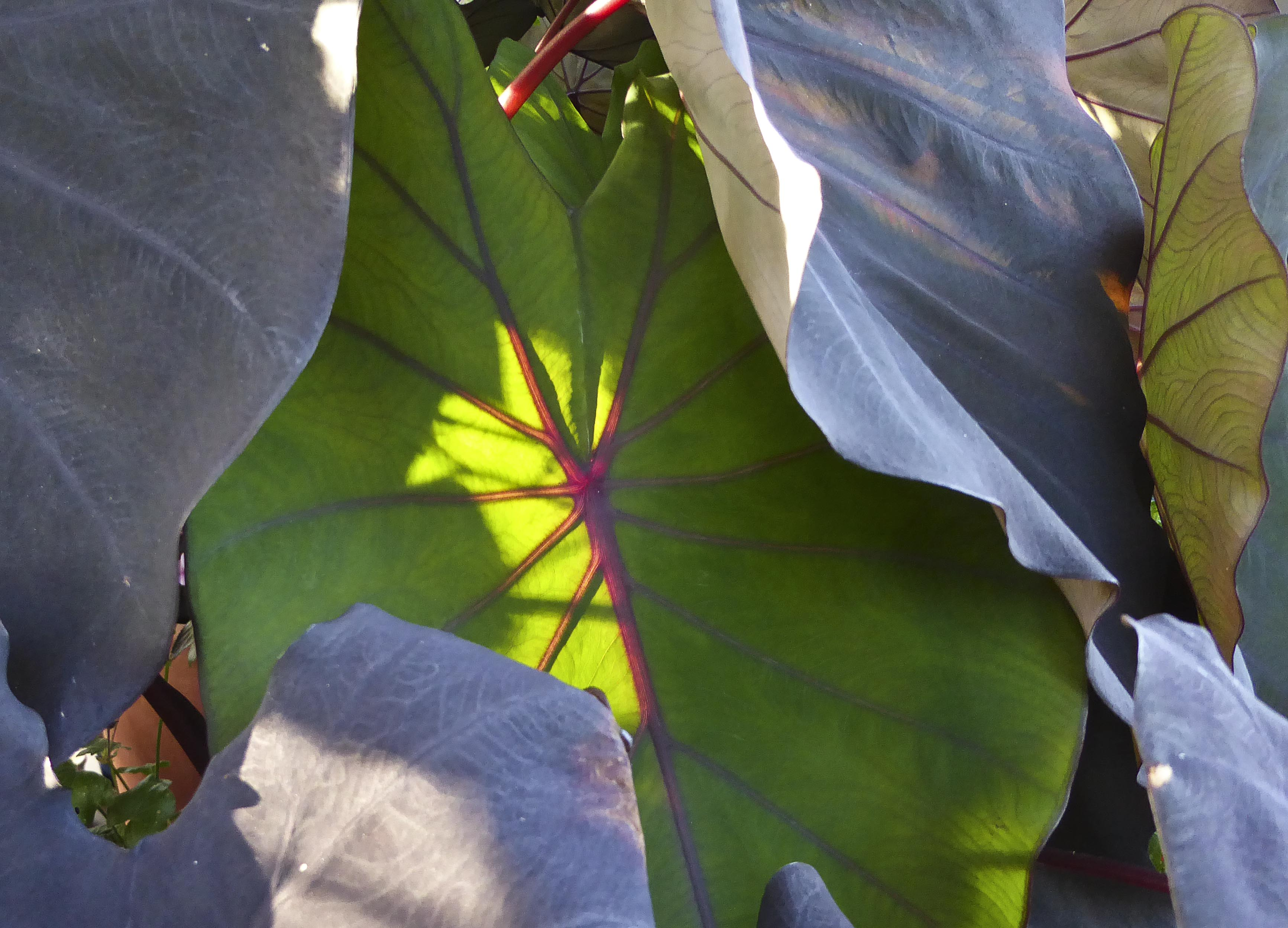 Kew Gardens – The Same Plant in Different Light