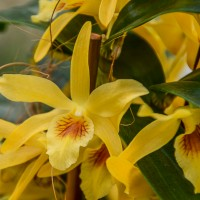 Keukenhof - Orchids